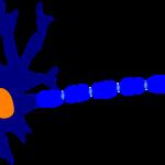 Lekke darmsyndroom veroorzaakt zenuwaandoeningen