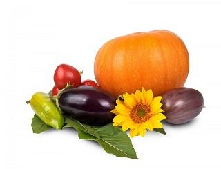 Uitleg biologische voeding